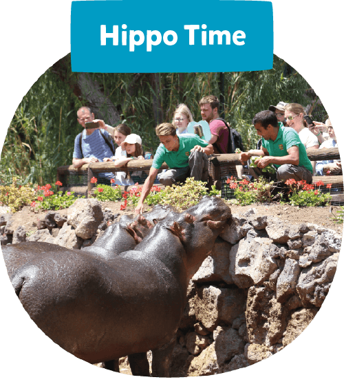 Hippo time